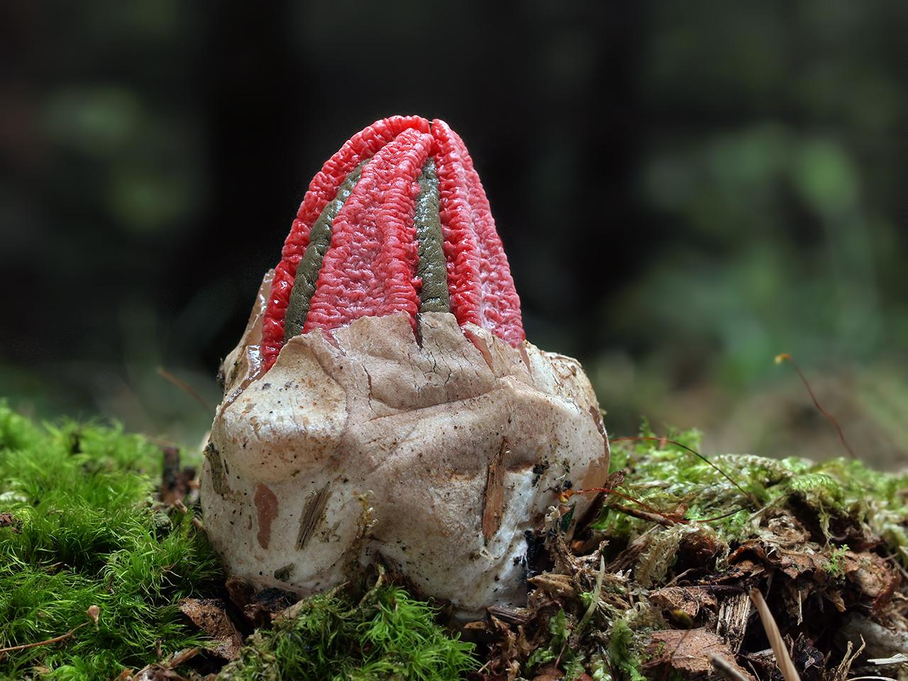 Nejen pro houbaře
