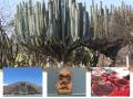 Mexiko země Mayů