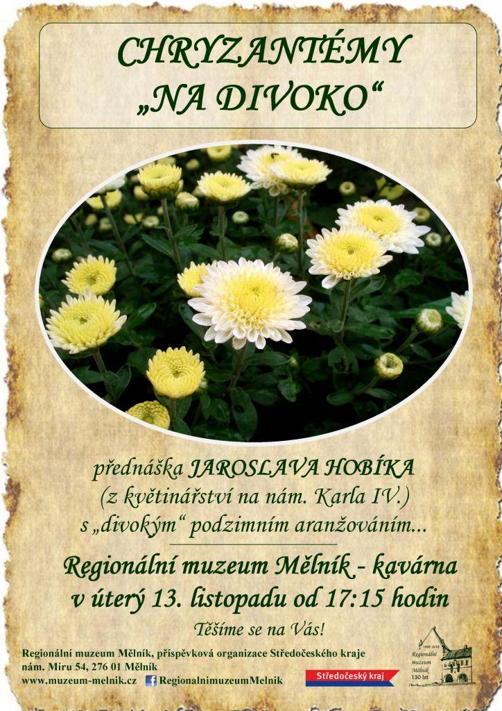 Chrysantémy na divoko