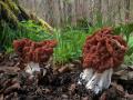 Jarní houby